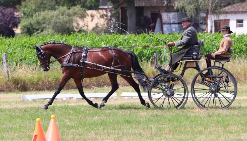 Ausbildung von Fahrpferden