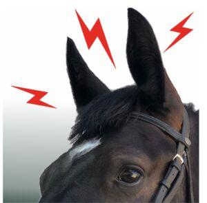 Wie gut hören Pferde